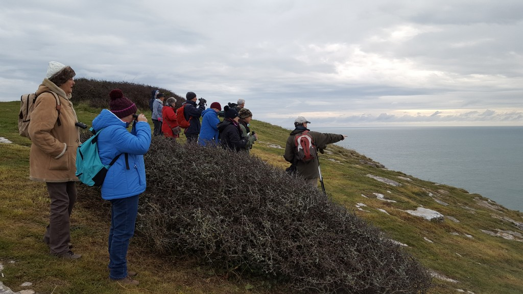 Birding with Mike Langman on Berry Head